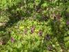 bunte-wildblumen