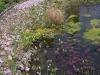 pflanzen-im-und-am-wasser